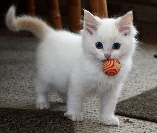 White Kitty Picture